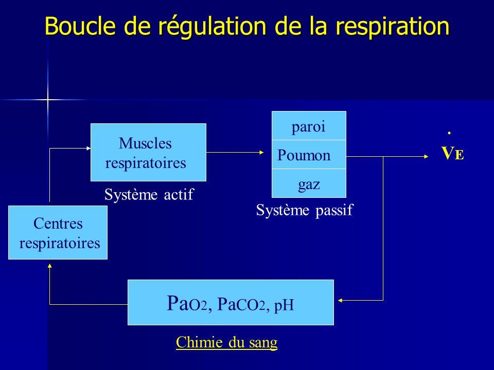 Boucle de régulation de la respiration Muscles respiratoires Poumon gaz.