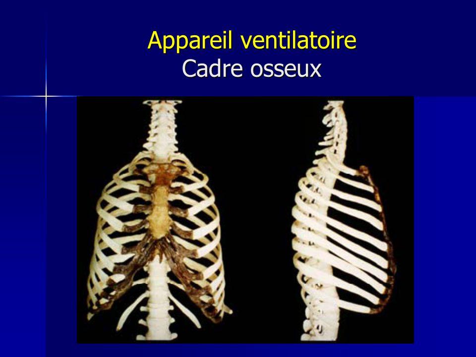 Appareil ventilatoire Cadre osseux