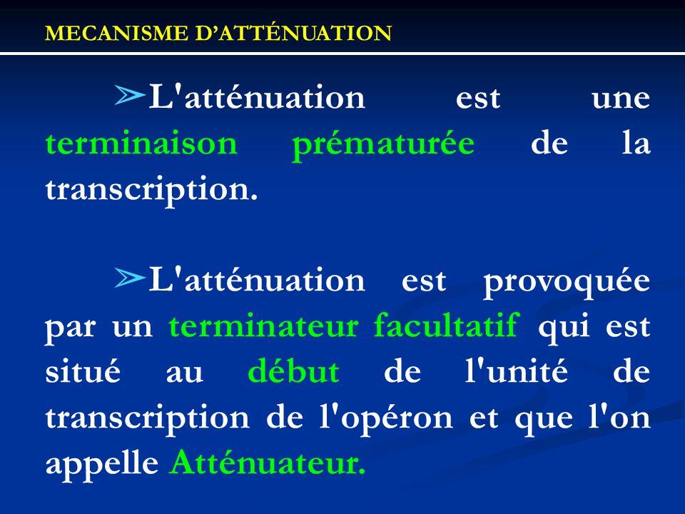 MECANISME DATTÉNUATION L'atténuation est une terminaison prématurée de la transcription. L'atténuation est provoquée par un terminateur facultatif qui