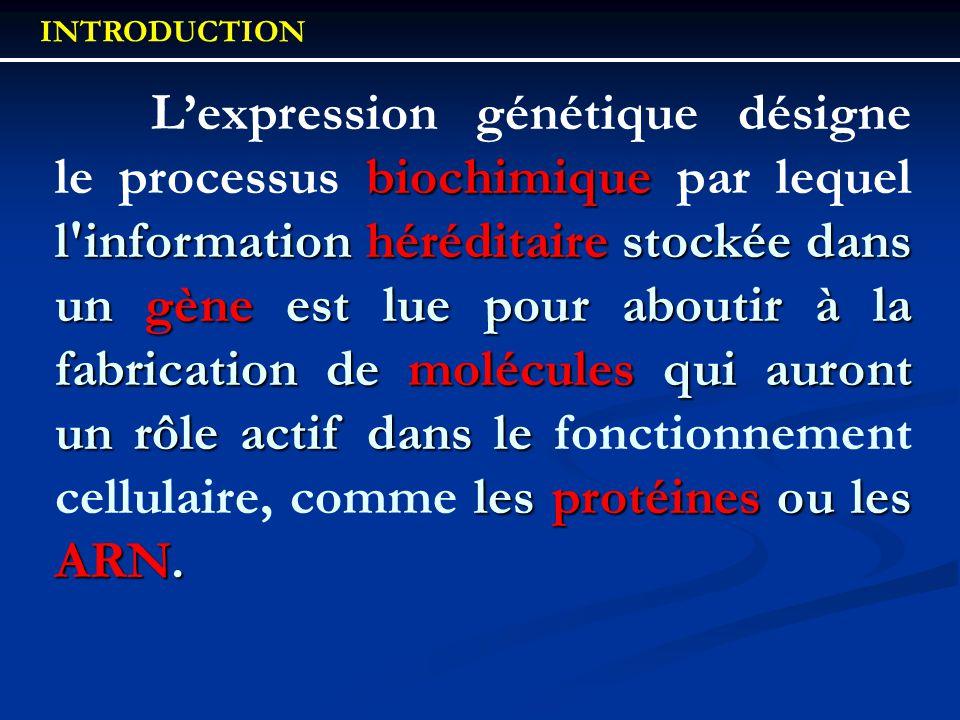 biochimique l'information héréditaire stockée dans un gène est lue pour aboutir à la fabrication de molécules qui auront un rôle actif dans le les pro