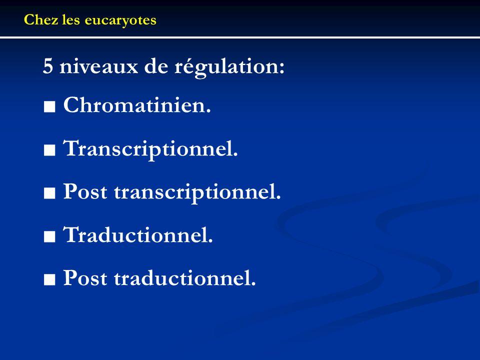 Chez les eucaryotes 5 niveaux de régulation: Chromatinien. Transcriptionnel. Post transcriptionnel. Traductionnel. Post traductionnel.