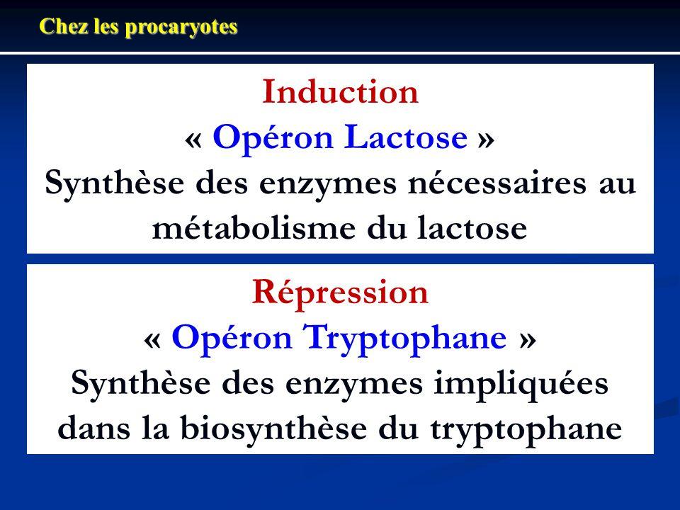 Induction « Opéron Lactose » Synthèse des enzymes nécessaires au métabolisme du lactose Chez les procaryotes Répression « Opéron Tryptophane » Synthès