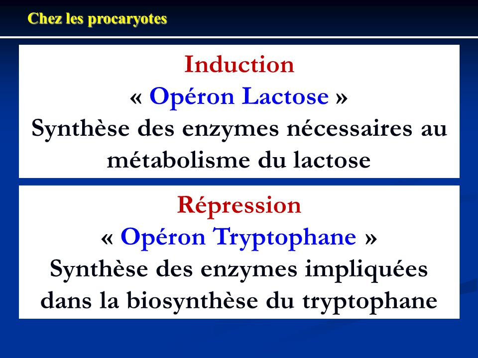 Organisation de lopéron Trp dE. coli