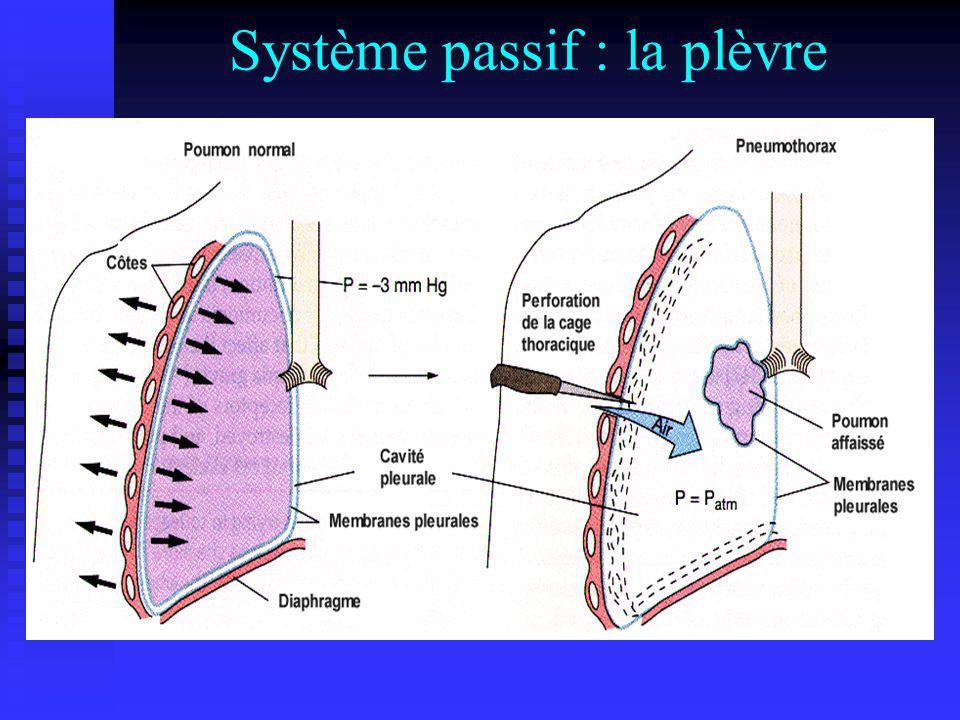 Système passif : la plèvre