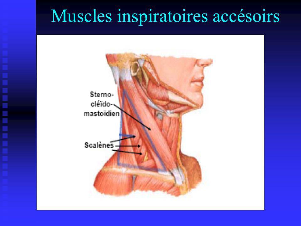 Muscles inspiratoires accésoirs