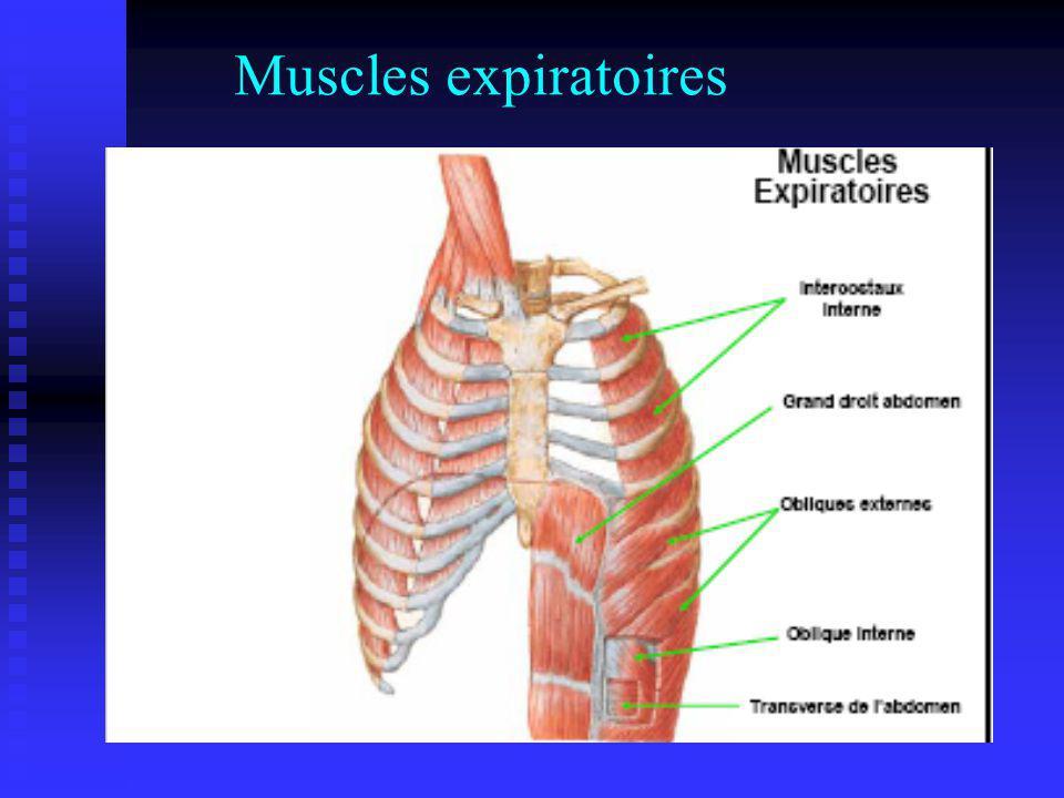 Muscles expiratoires