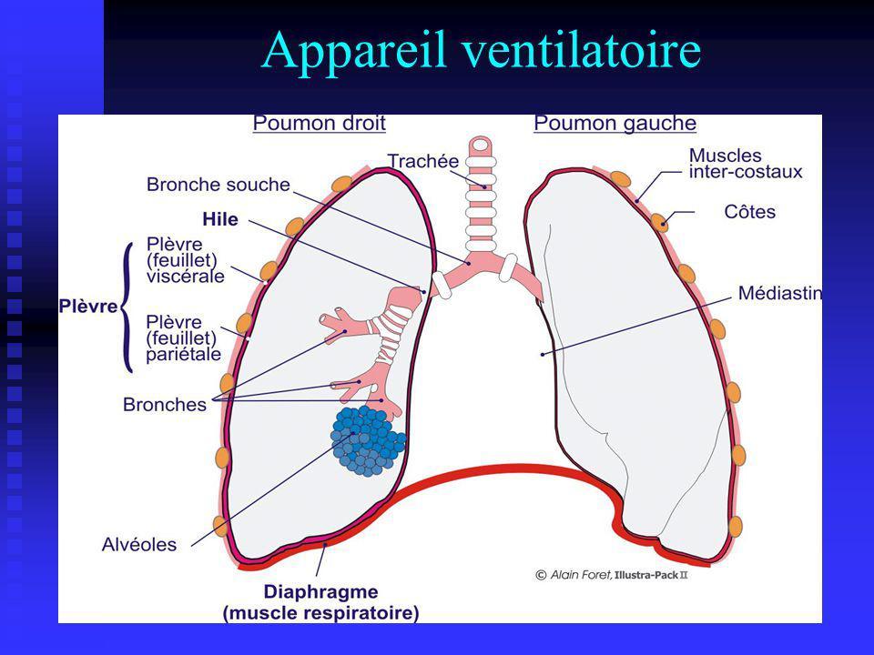 Appareil ventilatoire