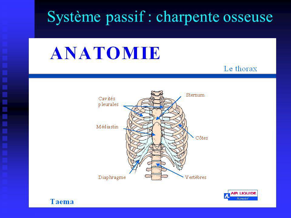 Système passif : charpente osseuse