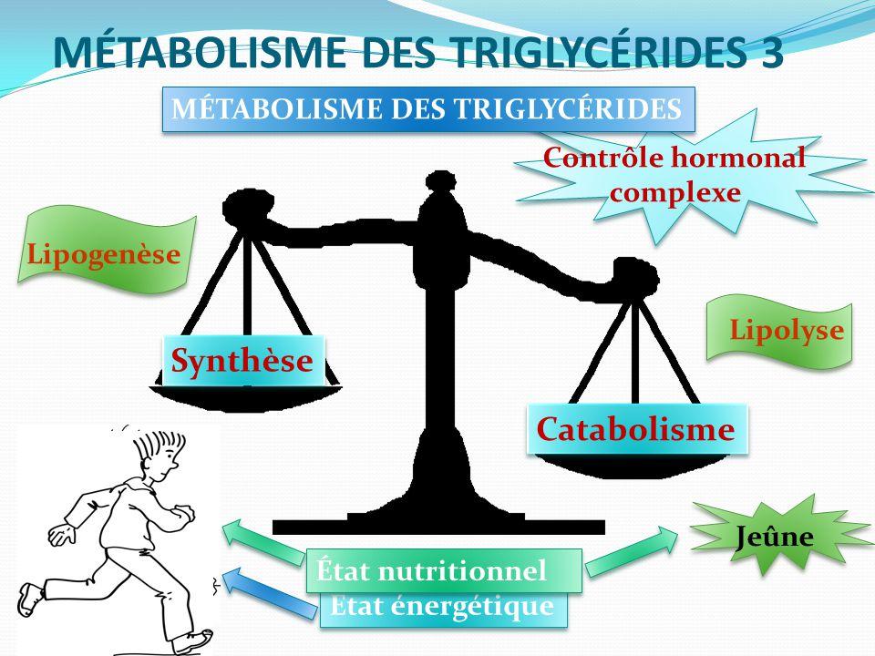MÉTABOLISME DES TRIGLYCÉRIDES 3 MÉTABOLISME DES TRIGLYCÉRIDES Synthèse Catabolisme État énergétique État nutritionnel Jeûne Lipogenèse Lipolyse Contrôle hormonal complexe