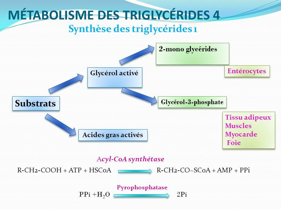 MÉTABOLISME DES TRIGLYCÉRIDES 4 Synthèse des triglycérides 1 Substrats Acides gras activés Glycérol activé 2-mono glycérides 2-mono glycérides Glycérol-3-phosphate Entérocytes Tissu adipeux Muscles Myocarde Foie Tissu adipeux Muscles Myocarde Foie R-CH2-COOH + ATP + HSCoA R-CH2-CO~SCoA + AMP + PPi Acyl-CoA synthétase PPi +H 2 O 2Pi Pyrophosphatase