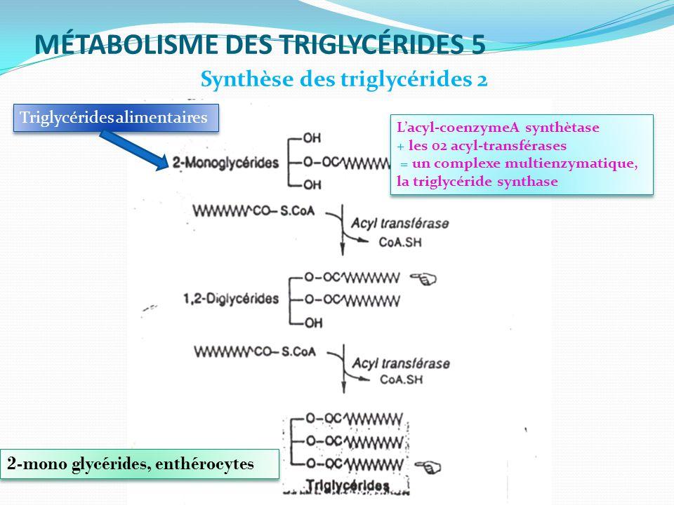 MÉTABOLISME DES TRIGLYCÉRIDES 5 2-mono glycérides, enthérocytes Synthèse des triglycérides 2 Lacyl-coenzymeA synthètase + les 02 acyl-transférases = un complexe multienzymatique, la triglycéride synthase Lacyl-coenzymeA synthètase + les 02 acyl-transférases = un complexe multienzymatique, la triglycéride synthase Triglycérides alimentaires