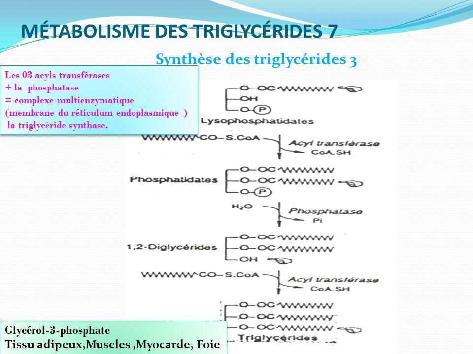MÉTABOLISME DES TRIGLYCÉRIDES 7 Glycérol-3-phosphate Tissu adipeux,Muscles,Myocarde, Foie Glycérol-3-phosphate Tissu adipeux,Muscles,Myocarde, Foie Synthèse des triglycérides 3 Les 03 acyls transférases + la phosphatase = complexe multienzymatique (membrane du réticulum endoplasmique ) la triglycéride synthase.