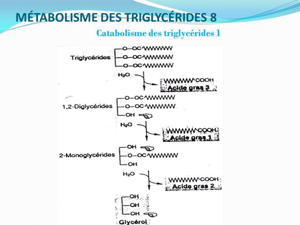 MÉTABOLISME DES TRIGLYCÉRIDES 8 Catabolisme des triglycérides 1