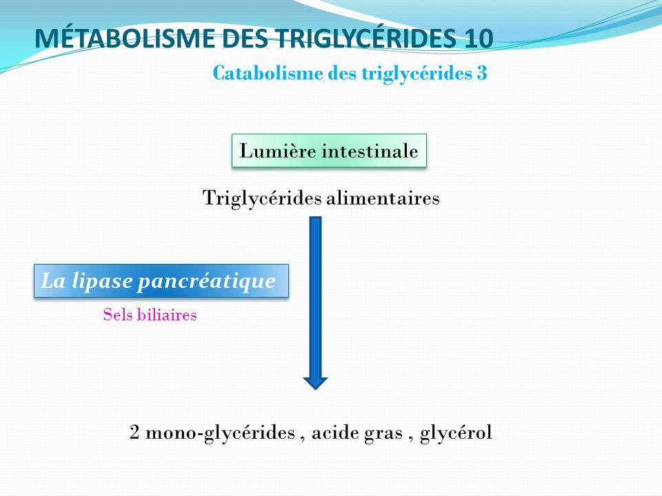 MÉTABOLISME DES TRIGLYCÉRIDES 10 Catabolisme des triglycérides 3 La lipase pancréatique Lumière intestinale Triglycérides alimentaires 2 mono-glycérides, acide gras, glycérol Sels biliaires