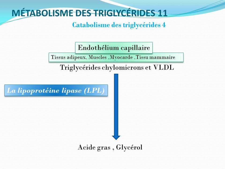 MÉTABOLISME DES TRIGLYCÉRIDES 11 Catabolisme des triglycérides 4 Acide gras, Glycérol La lipoprotéine lipase (LPL) Triglycérides chylomicrons et VLDL Tissus adipeux, Muscles,Myocarde,Tissu mammaire Endothélium capillaire