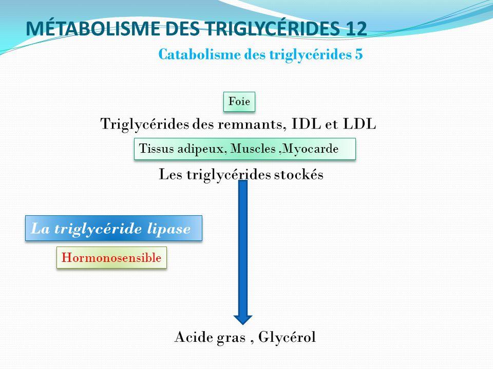 MÉTABOLISME DES TRIGLYCÉRIDES 12 Catabolisme des triglycérides 5 Acide gras, Glycérol Triglycérides des remnants, IDL et LDL Tissus adipeux, Muscles,Myocarde La triglycéride lipase Foie Les triglycérides stockés Hormonosensible