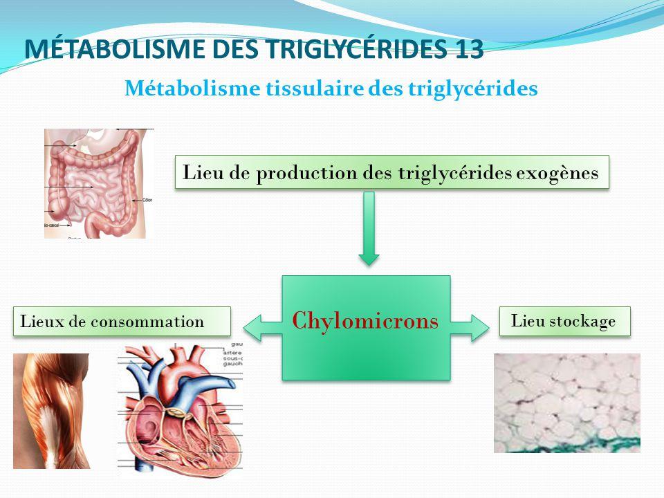 MÉTABOLISME DES TRIGLYCÉRIDES 13 Métabolisme tissulaire des triglycérides Lieu de production des triglycérides exogènes Lieu stockage Lieux de consommation Chylomicrons