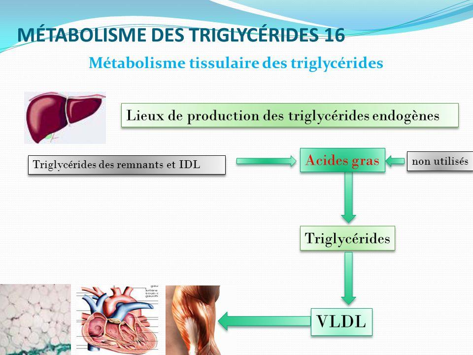 MÉTABOLISME DES TRIGLYCÉRIDES 16 Métabolisme tissulaire des triglycérides Lieux de production des triglycérides endogènes Acides gras Triglycérides des remnants et IDL Triglycérides VLDL non utilisés