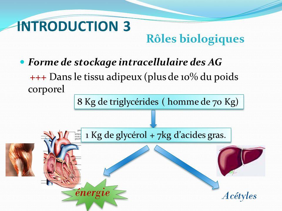 INTRODUCTION 3 Forme de stockage intracellulaire des AG +++ Dans le tissu adipeux (plus de 10% du poids corporel Rôles biologiques Acétyles 1 Kg de glycérol + 7kg dacides gras.
