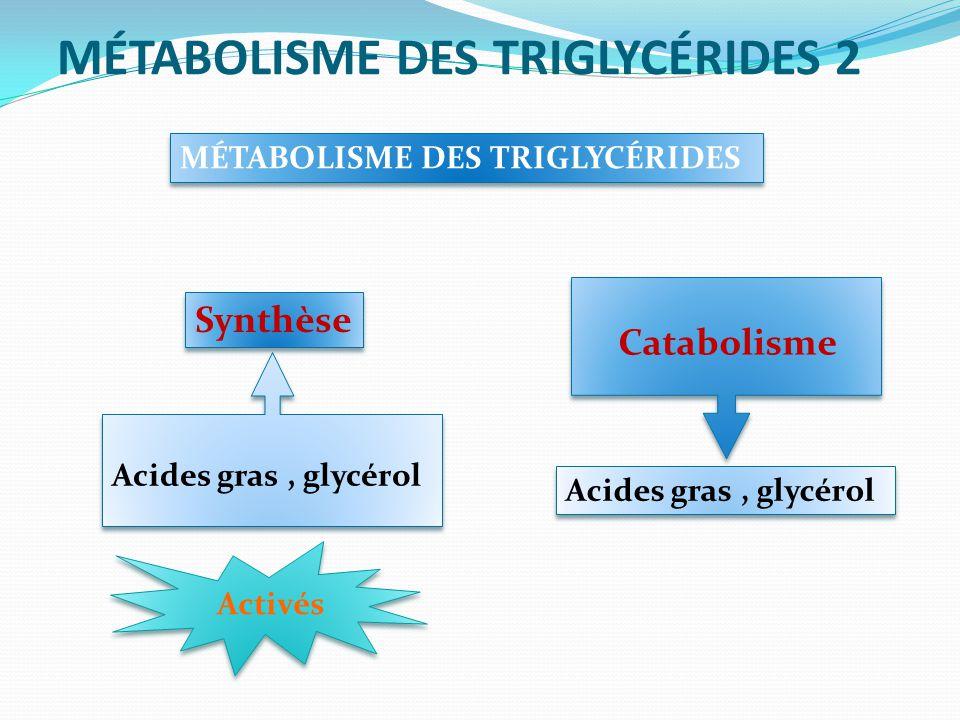 MÉTABOLISME DES TRIGLYCÉRIDES 2 MÉTABOLISME DES TRIGLYCÉRIDES Synthèse Acides gras, glycérol Activés Acides gras, glycérol Catabolisme
