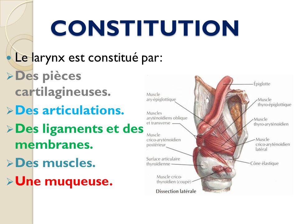 CONSTITUTION Le larynx est constitué par: Des pièces cartilagineuses. Des articulations. Des ligaments et des membranes. Des muscles. Une muqueuse.