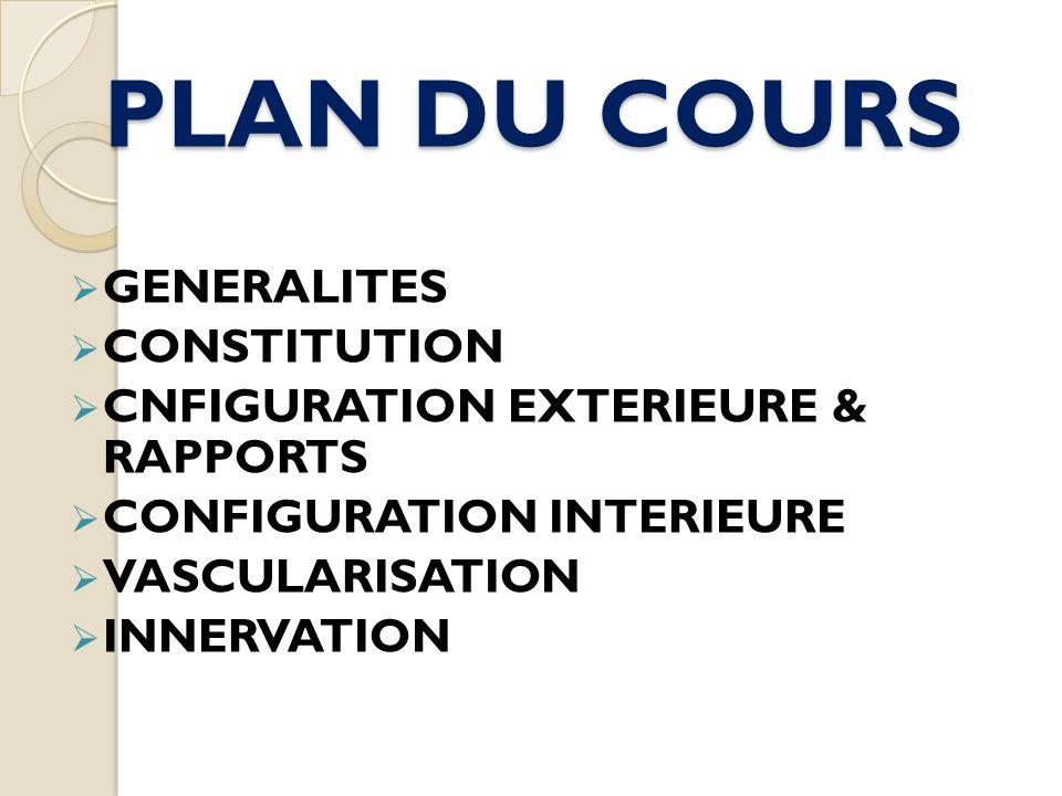 PLAN DU COURS GENERALITES CONSTITUTION CNFIGURATION EXTERIEURE & RAPPORTS CONFIGURATION INTERIEURE VASCULARISATION INNERVATION