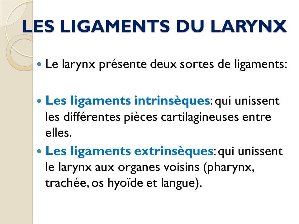LES LIGAMENTS DU LARYNX Le larynx présente deux sortes de ligaments: Les ligaments intrinsèques: qui unissent les différentes pièces cartilagineuses e