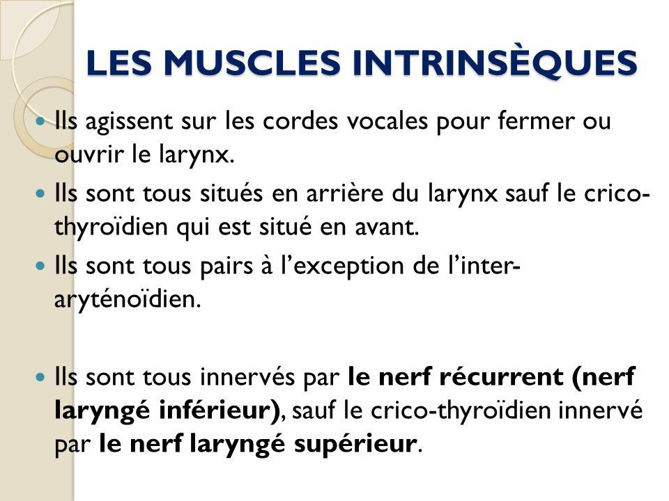 LES MUSCLES INTRINSÈQUES Ils agissent sur les cordes vocales pour fermer ou ouvrir le larynx. Ils sont tous situés en arrière du larynx sauf le crico-