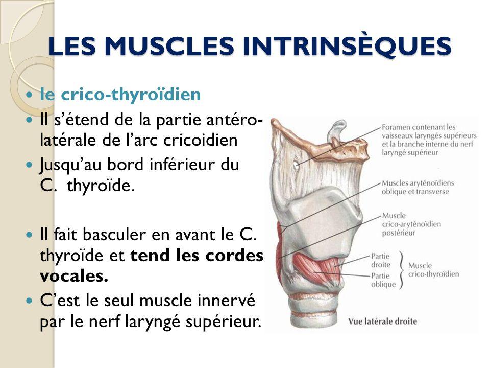 LES MUSCLES INTRINSÈQUES le crico-thyroïdien Il sétend de la partie antéro- latérale de larc cricoidien Jusquau bord inférieur du C. thyroïde. Il fait