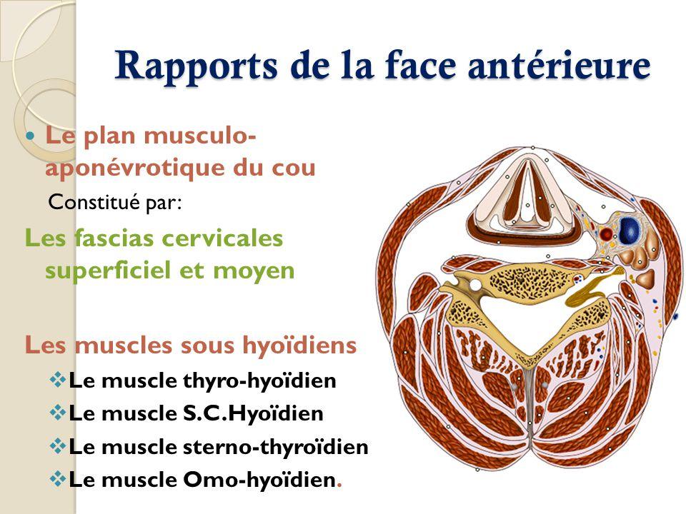 Rapports de la face antérieure Le plan musculo- aponévrotique du cou Constitué par: Les fascias cervicales superficiel et moyen Les muscles sous hyoïd