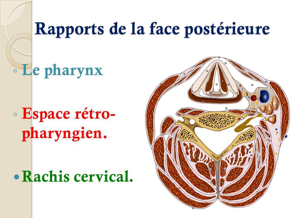 Rapports de la face postérieure Le pharynx Espace rétro- pharyngien. Rachis cervical.