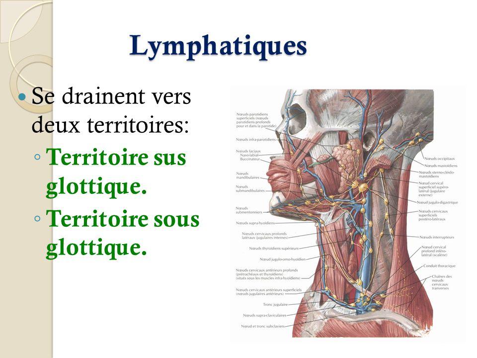 Lymphatiques Se drainent vers deux territoires: Territoire sus glottique. Territoire sous glottique.
