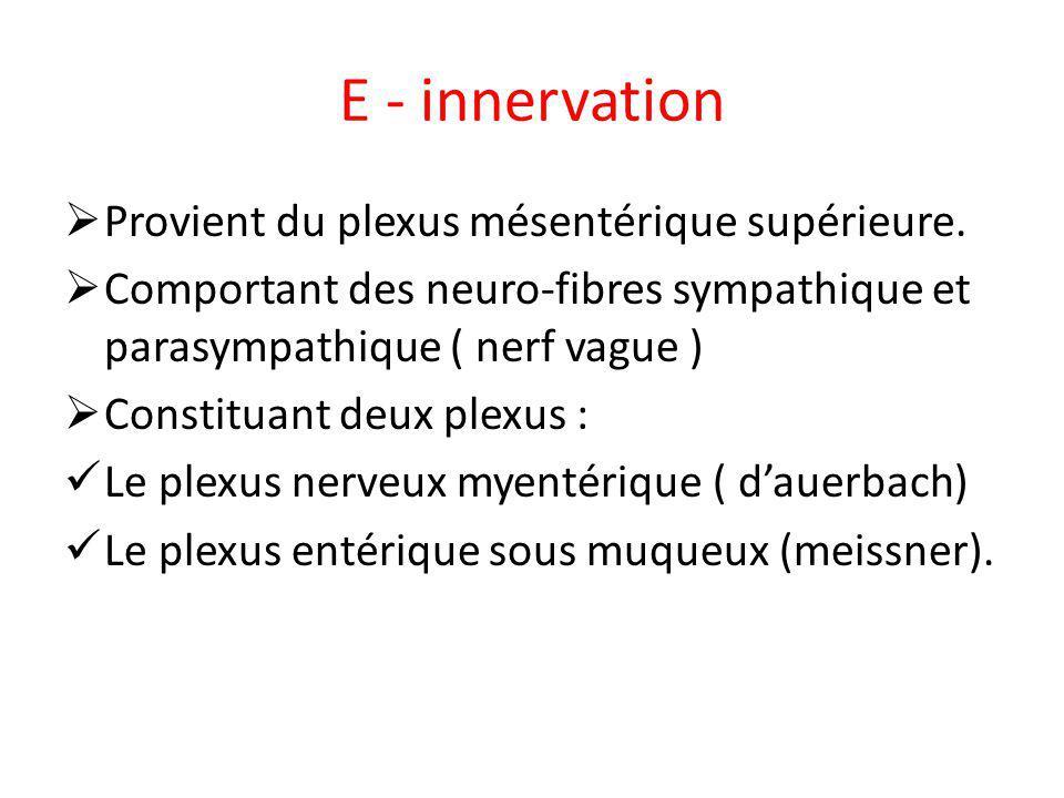 E - innervation Provient du plexus mésentérique supérieure. Comportant des neuro-fibres sympathique et parasympathique ( nerf vague ) Constituant deux