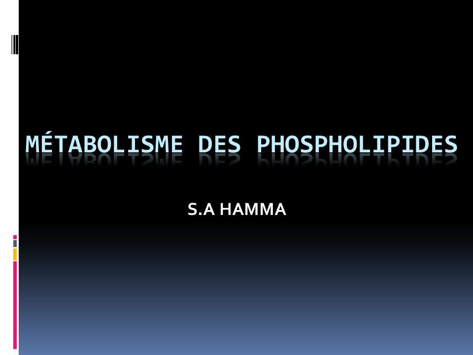 MÉTABOLISME DES GLYCÉROPHOSPHOLIPIDES 1 Métabolisme des glycérophospholipides synthèse 1,2-diglycéride Alcool Ethanolamine, choline, inositol, sérine ou phosphatidylglycérol Catabolisme Phospholipases