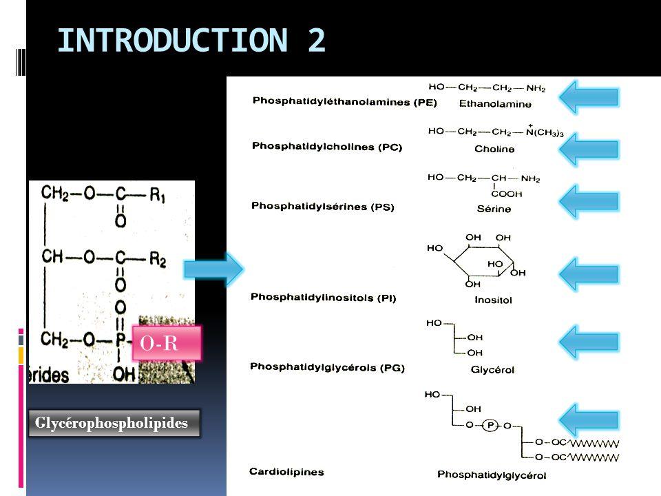 INTRODUCTION 2 O-R Glycérophospholipides