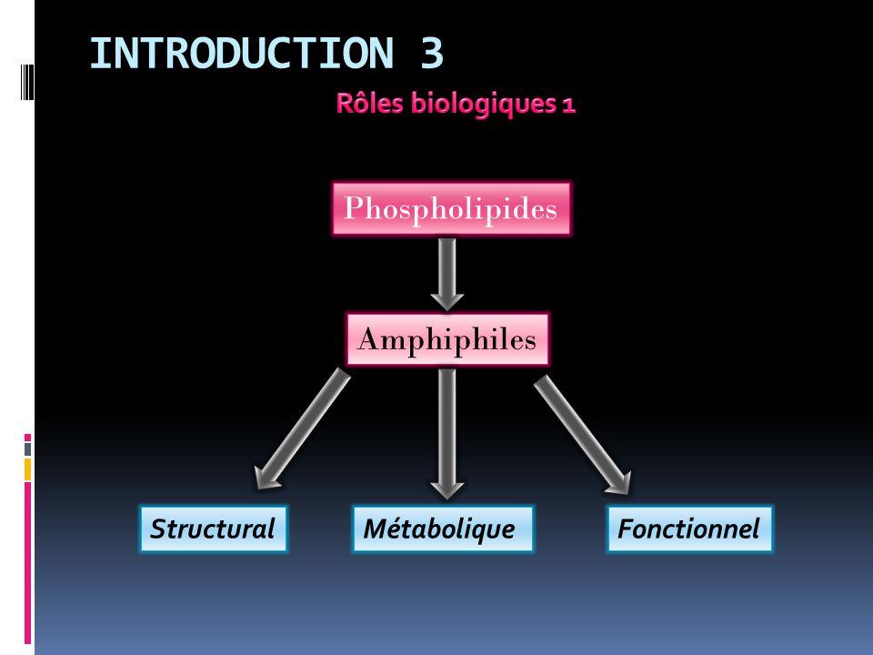 INTRODUCTION 3 Phospholipides Amphiphiles StructuralMétaboliqueFonctionnel