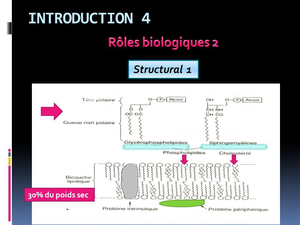 MÉTABOLISME DES GLYCÉROPHOSPHOLIPIDES 5