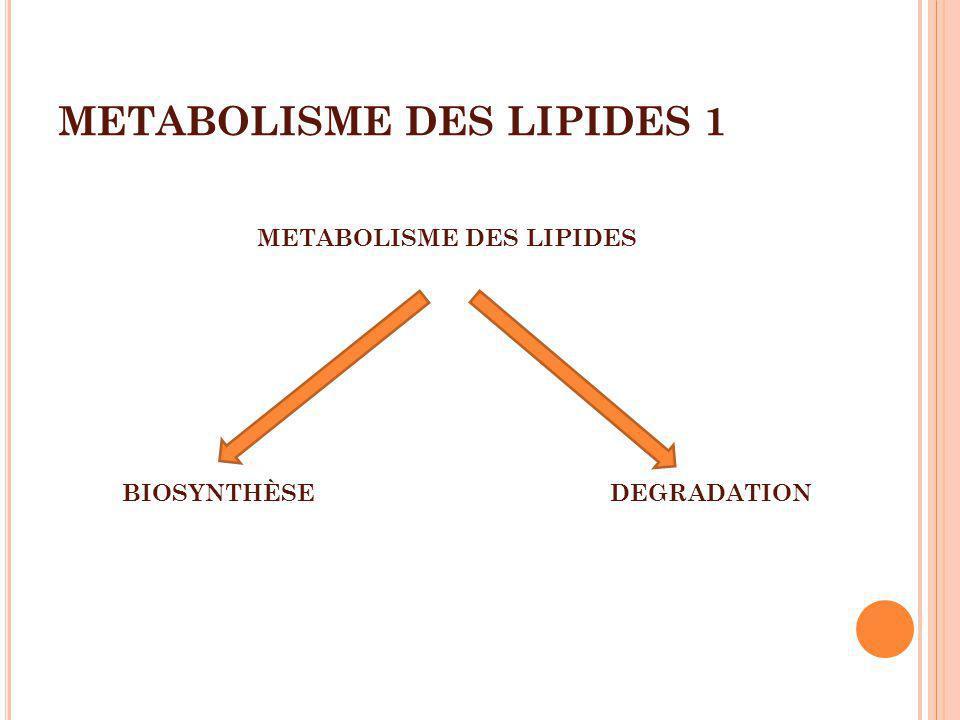METABOLISME DES LIPIDES 1 METABOLISME DES LIPIDES BIOSYNTHÈSEDEGRADATION