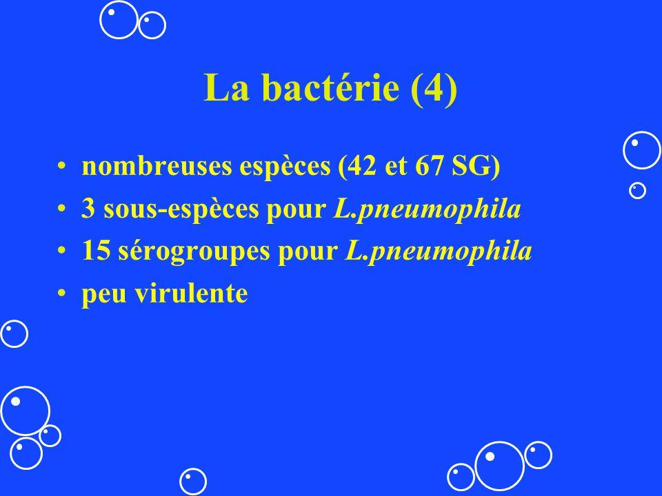 La bactérie (4) nombreuses espèces (42 et 67 SG) 3 sous-espèces pour L.pneumophila 15 sérogroupes pour L.pneumophila peu virulente