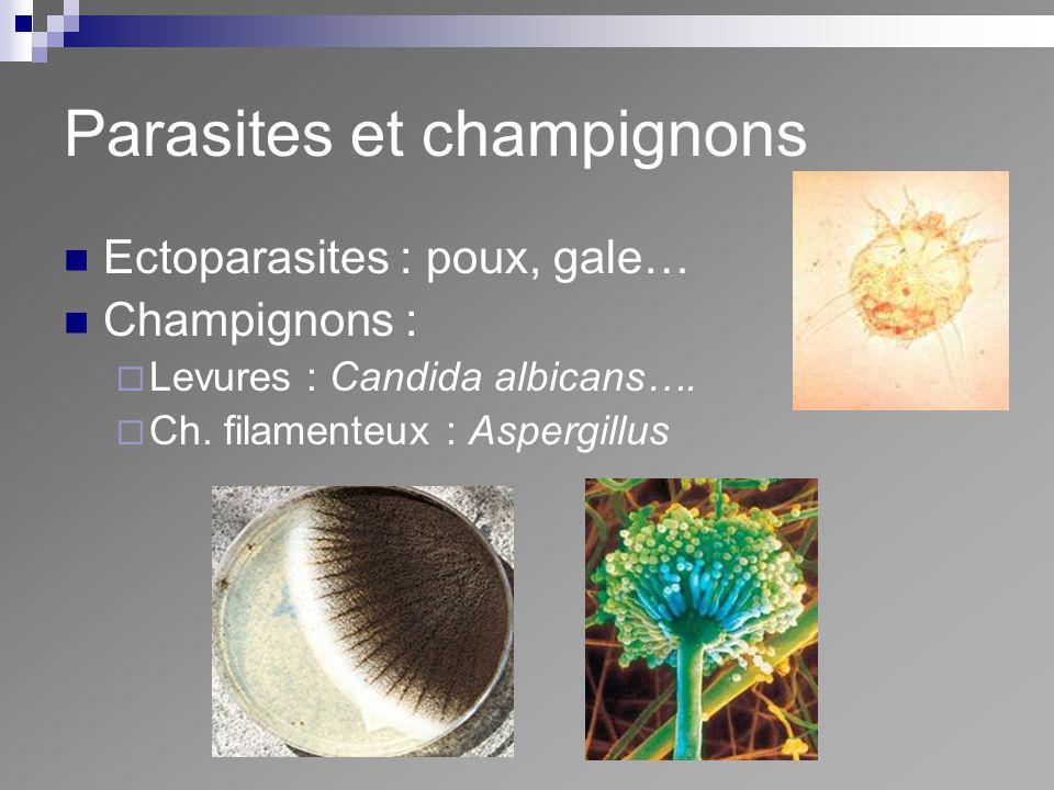 Parasites et champignons Ectoparasites : poux, gale… Champignons : Levures : Candida albicans…. Ch. filamenteux : Aspergillus