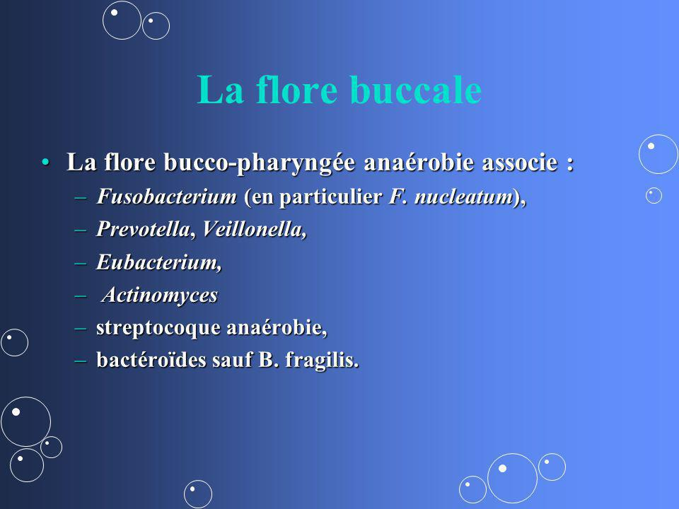 La flore buccale La flore bucco-pharyngée anaérobie associe :La flore bucco-pharyngée anaérobie associe : –Fusobacterium (en particulier F. nucleatum)