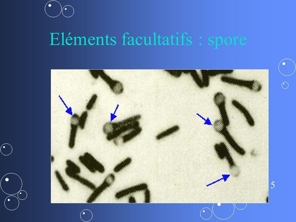 15 Eléments facultatifs : spore