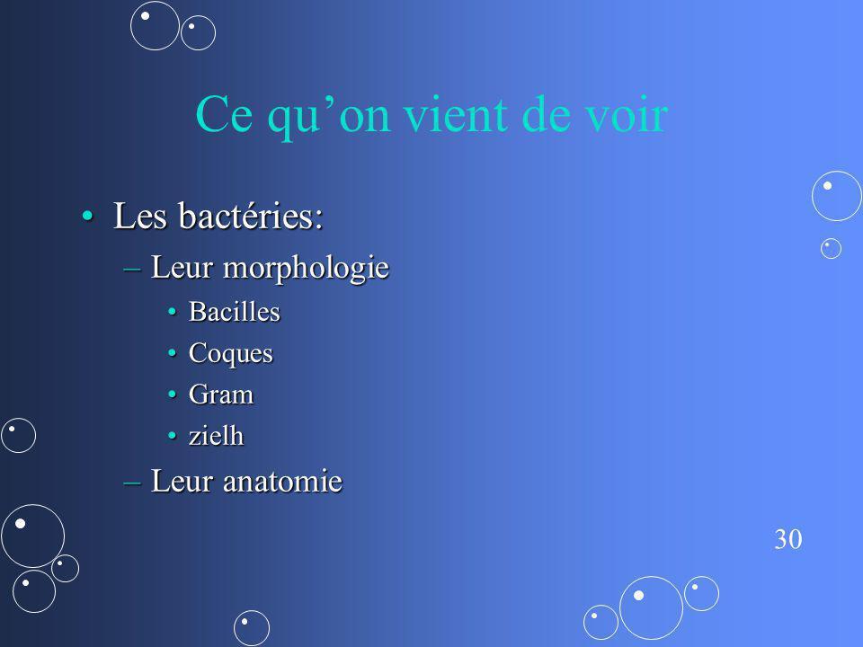 30 Ce quon vient de voir Les bactéries:Les bactéries: –Leur morphologie BacillesBacilles CoquesCoques GramGram zielhzielh –Leur anatomie
