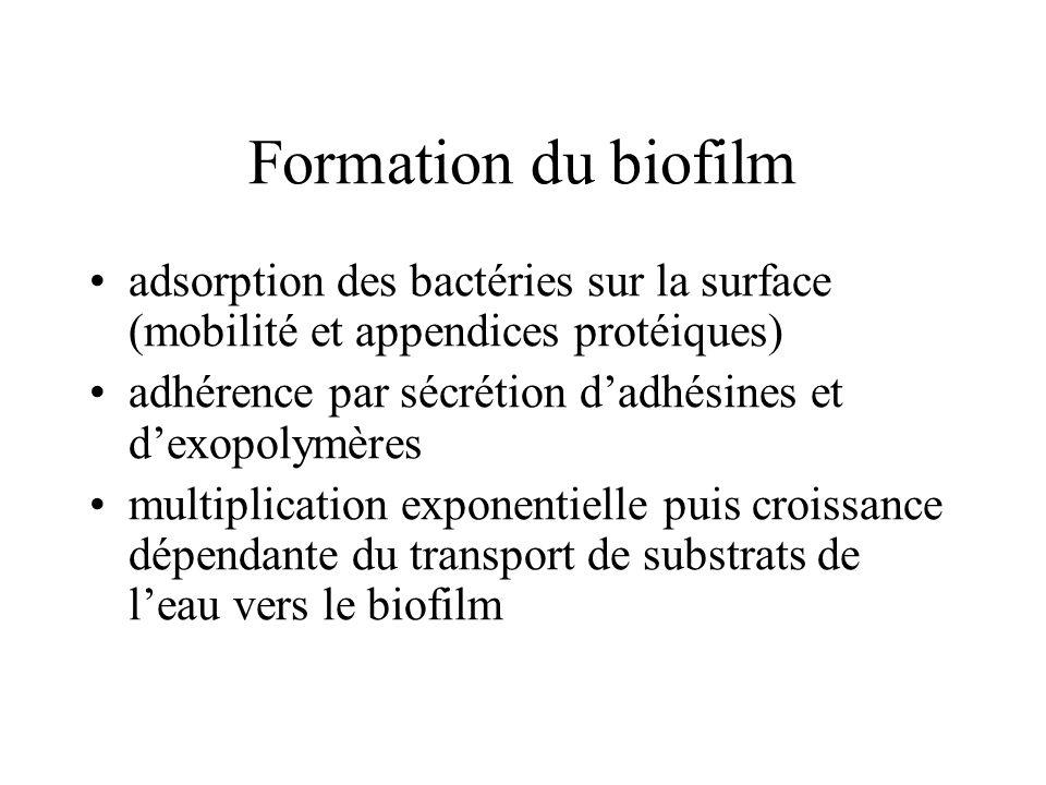 Formation du biofilm adsorption des bactéries sur la surface (mobilité et appendices protéiques) adhérence par sécrétion dadhésines et dexopolymères multiplication exponentielle puis croissance dépendante du transport de substrats de leau vers le biofilm