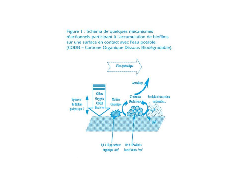 Structure du biofilm ensemble de cellules microbiennes, uniques ou en micro-colonies adhérant à la surface du matériau enchevêtrées au sein dun réseau complexe, hautement hydraté, dexopolymères (fibres saccharidiques, lipides, protéines) avec dépôts minéraux ou de corrosion