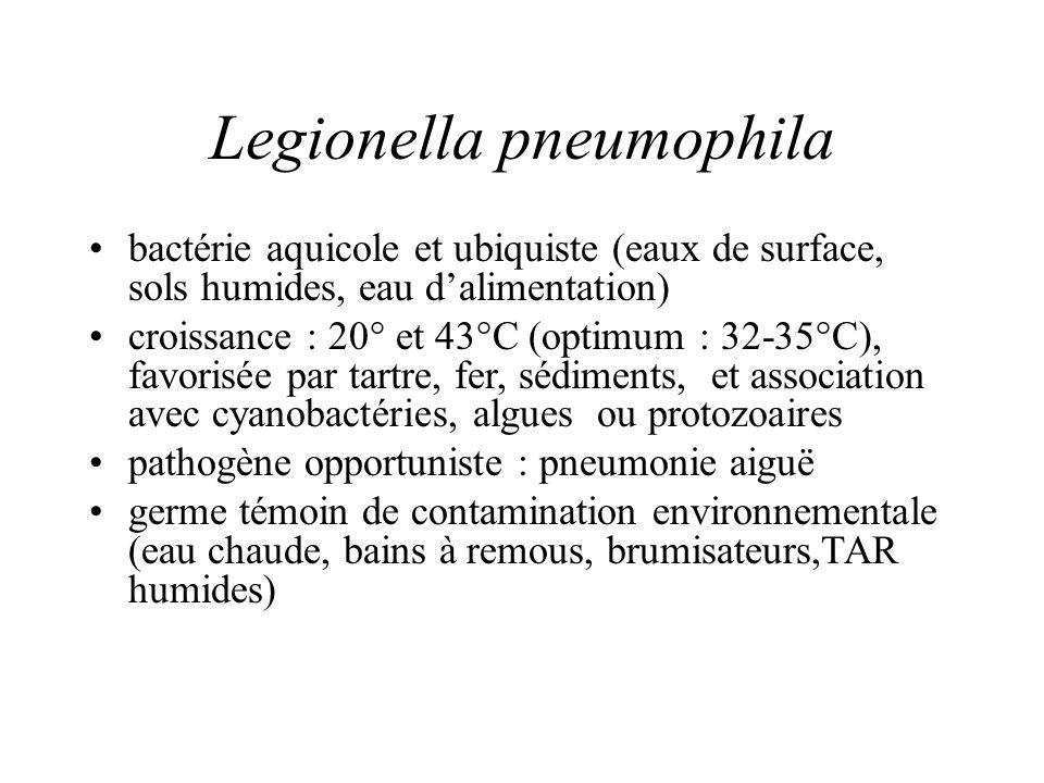 Legionella pneumophila bactérie aquicole et ubiquiste (eaux de surface, sols humides, eau dalimentation) croissance : 20° et 43°C (optimum : 32-35°C), favorisée par tartre, fer, sédiments, et association avec cyanobactéries, algues ou protozoaires pathogène opportuniste : pneumonie aiguë germe témoin de contamination environnementale (eau chaude, bains à remous, brumisateurs,TAR humides)