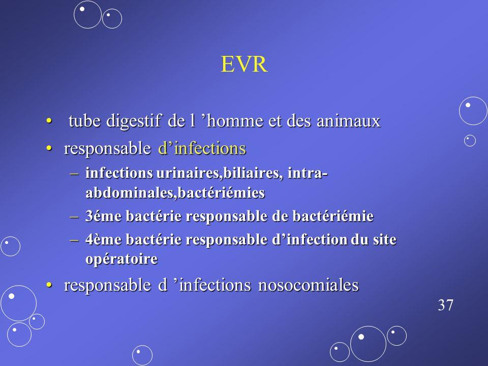 36 Pseudomonas aeruginosa P. aeruginosa : 10 à 11% des bactéries responsables d'IN.P. aeruginosa : 10 à 11% des bactéries responsables d'IN. Les souch