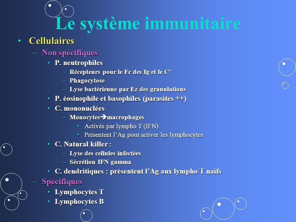 Le système immunitaire CellulairesCellulaires –Non spécifiques P. neutrophilesP. neutrophiles –Récepteurs pour le Fc des Ig et le C –Phagocytose –Lyse