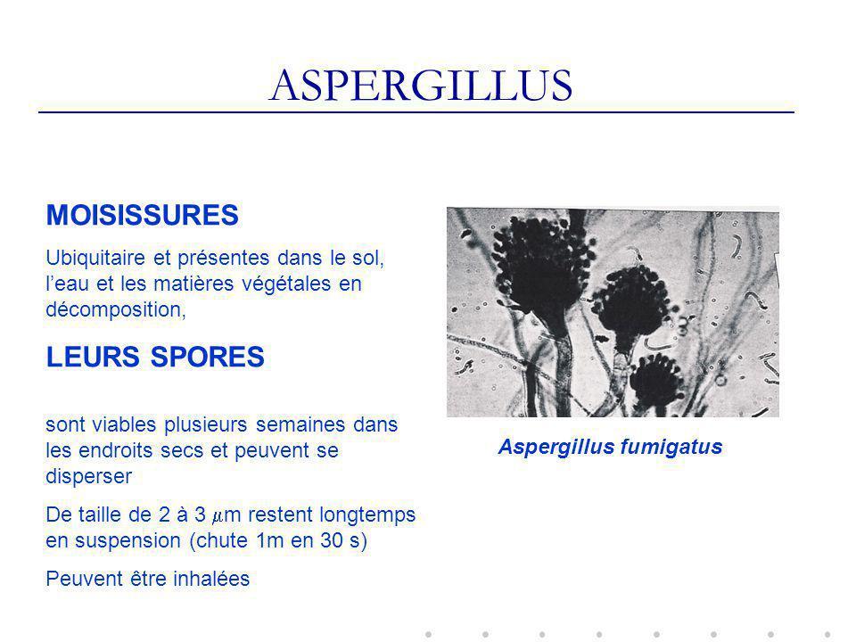 ASPERGILLUS MOISISSURES Ubiquitaire et présentes dans le sol, leau et les matières végétales en décomposition, LEURS SPORES sont viables plusieurs semaines dans les endroits secs et peuvent se disperser De taille de 2 à 3 m restent longtemps en suspension (chute 1m en 30 s) Peuvent être inhalées Aspergillus fumigatus