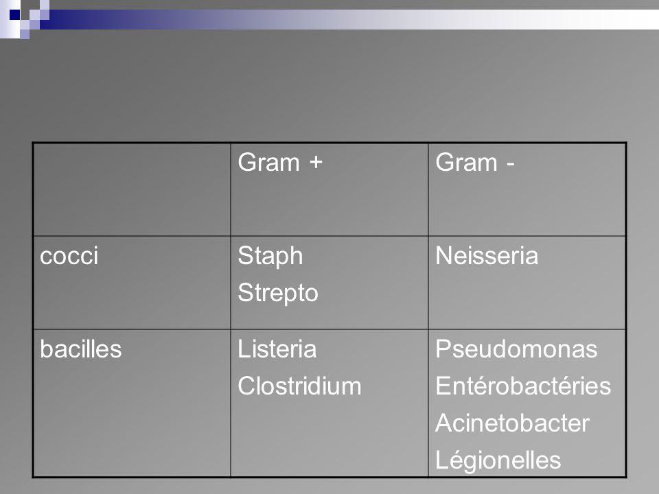 Gram +Gram - cocciStaph Strepto Neisseria bacillesListeria Clostridium Pseudomonas Entérobactéries Acinetobacter Légionelles